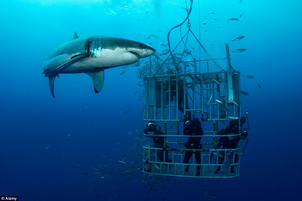 Best places to see huge sharks FOR REAL from cage diving in SA to aquarium water slides in Dubai