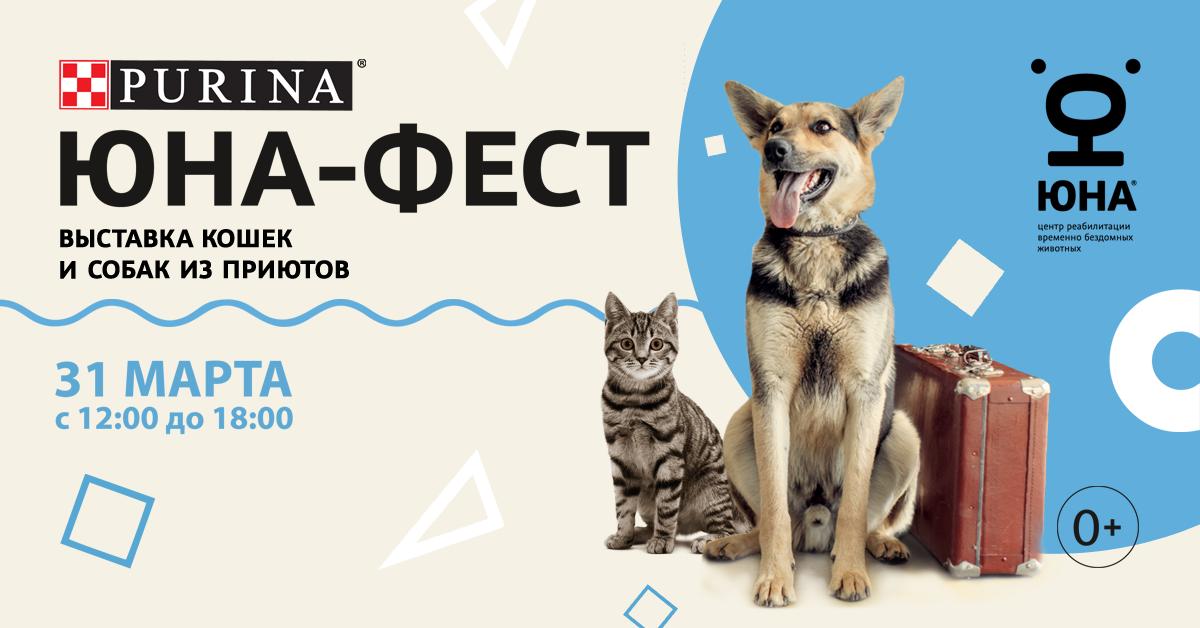 выставка собак и кошек