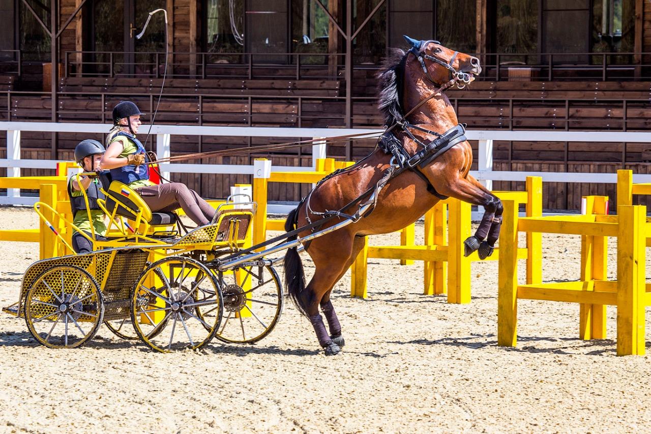 Одним из таких грандиозных событий этого лета станет Международный конный фестиваль «Иваново Поле», который состоится 19-21 июня в Подмосковье.