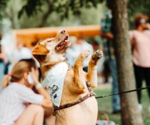 Выставка всем по собаке